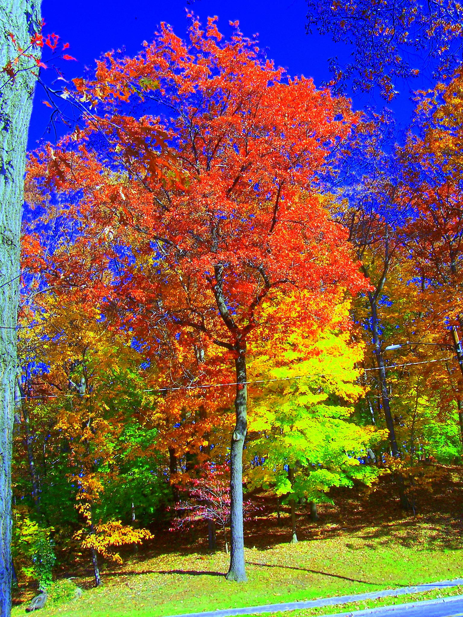 Photo Friday: Autumn   Sweet Sunshower