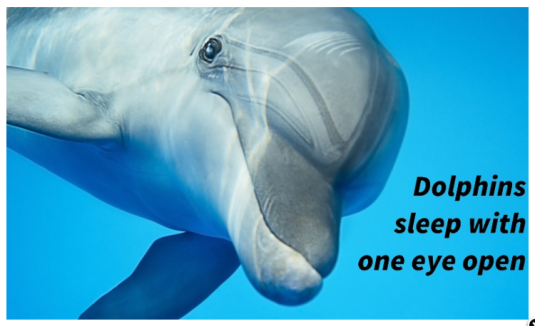 dolphins sleep eye