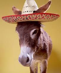 sombrero donkey